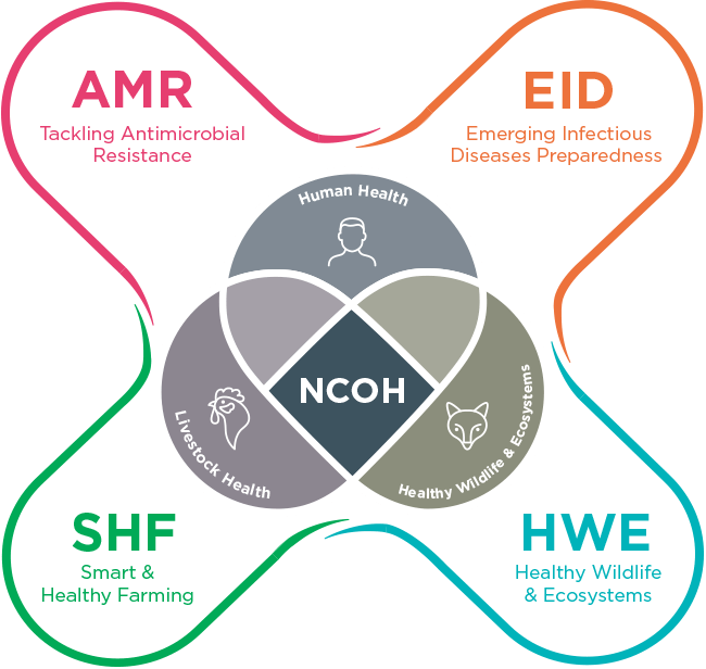 NCOH infographic